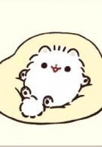 Mochi Is A Pomeranian